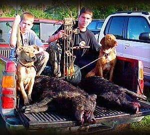 Wild Boar Hunt Report: April 12th, 2001