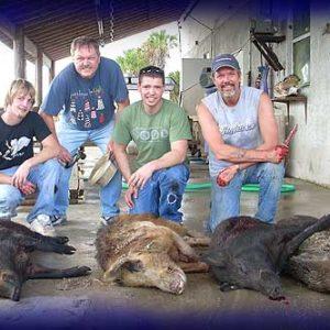 Wild Boar Hunt Report: January 13th, 2008