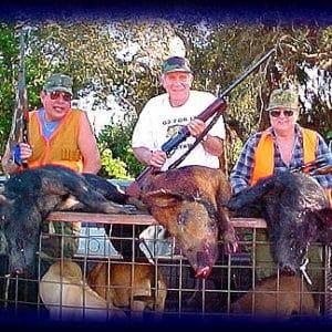 Wild Boar Hunt Report: February 11th, 2003