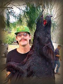 Wild Boar Hunt Report: February 1st, 2001