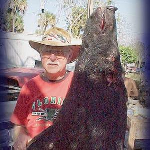 Wild Boar Hunt Report: February 17th, 2006
