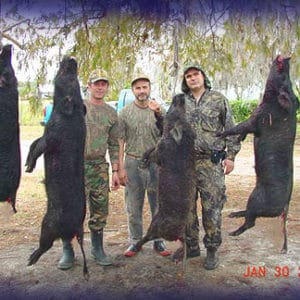 Wild Boar Hunt Report: January 30th, 2006