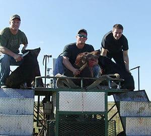 Wild Boar Hunt Report: December 26th, 2008