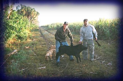 Wild Boar Hunt Report: January 4th, 2006