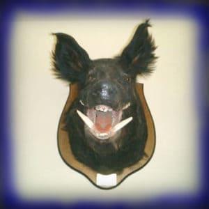 Wild Boar Hunt Report: February 21st, 2006